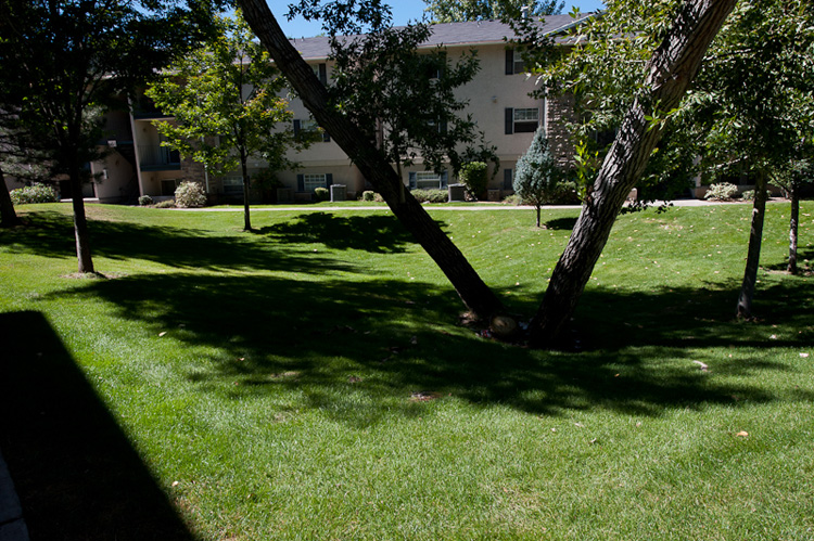 Healthy trees shading a well kept lawn